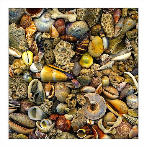 fp260. Seashell Delight