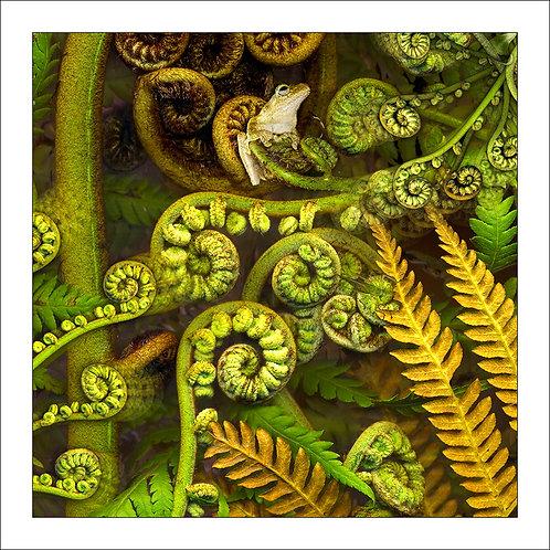 fp226. Green Eyed Treefrog (side profile)
