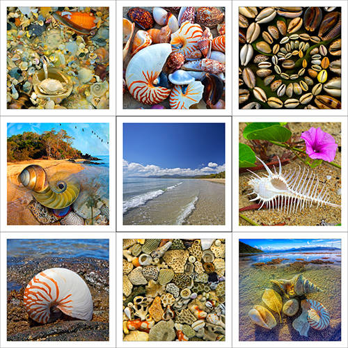 Seashells & Beach
