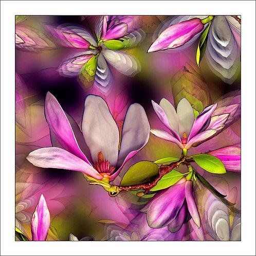 fp20. Magnolia