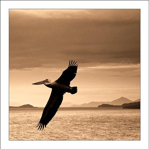 fp109. Pelican Horizon