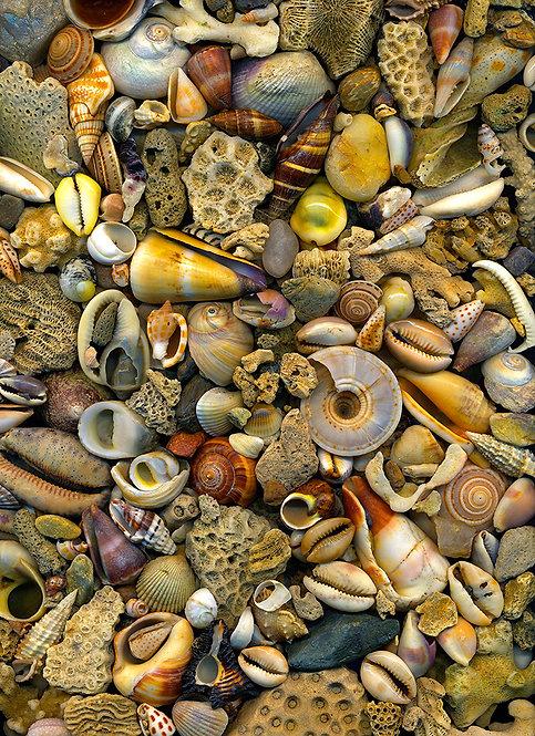 Seashell Delight