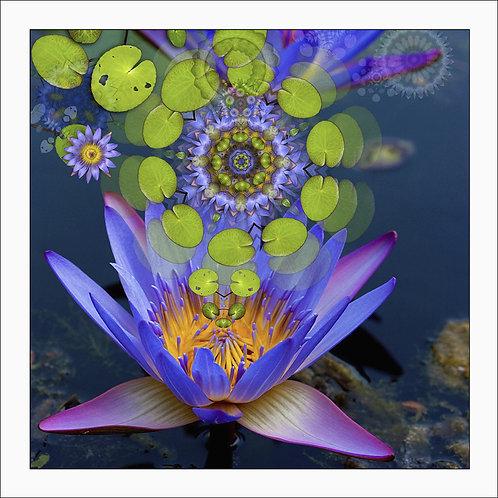 fp3. Lotus Rising