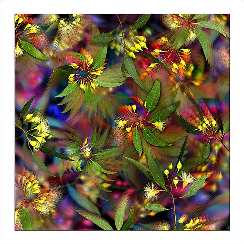 fp104. Flowering Sunbird