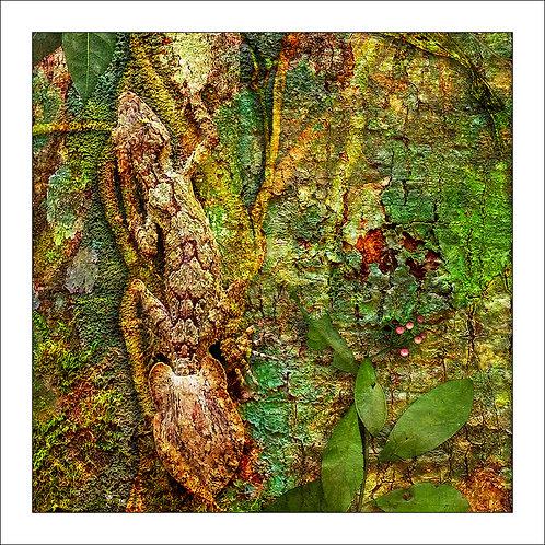fp128. Leaf Tail Gecko