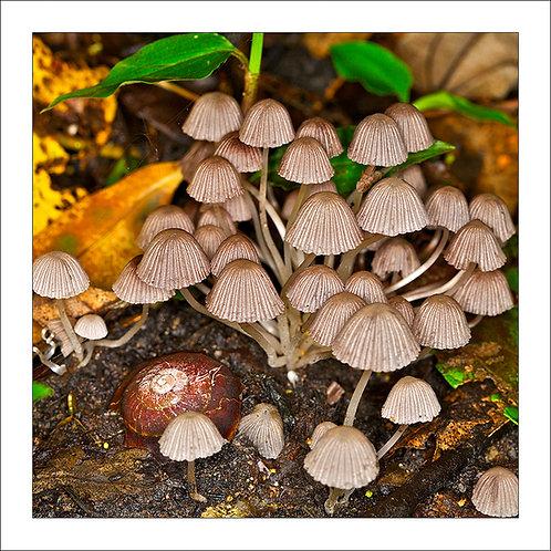 fp139. mushroom snailshell