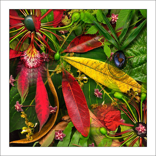 fp2. Rainforestation