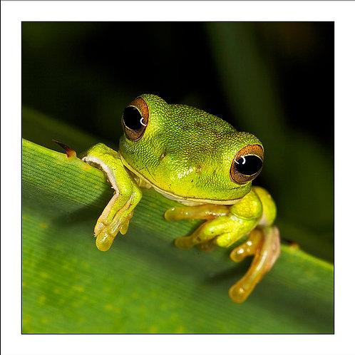 fp191. Hello Froggy