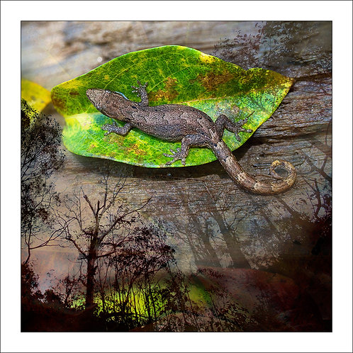 fp232. Gecko Leaf