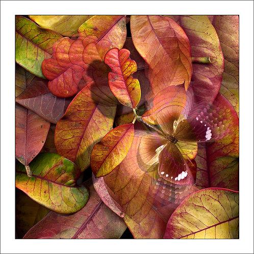 fp16. Autumn Breeze
