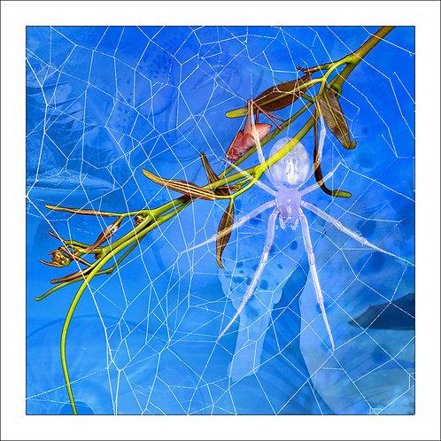fp214. Spider Blue