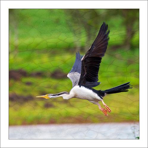 fp239. Snakebird