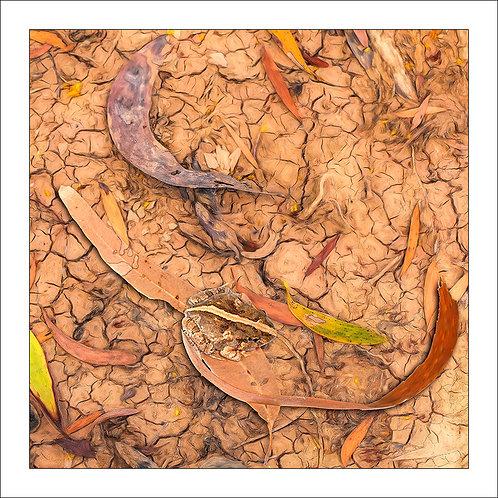 fp306. Ornate Burrowing frog