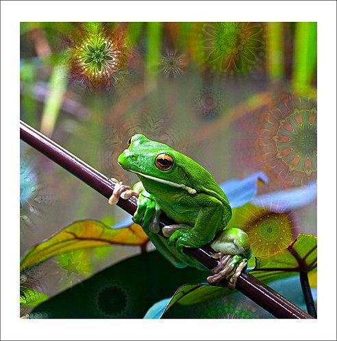 fp45. White Lipped Treefrog