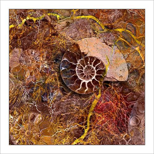 fp29. Ammonite