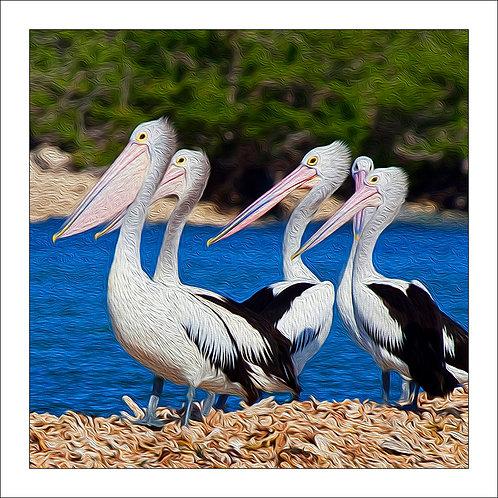 fp94. Pelican Family