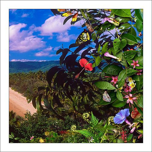 fp149. Hibiscus Sky