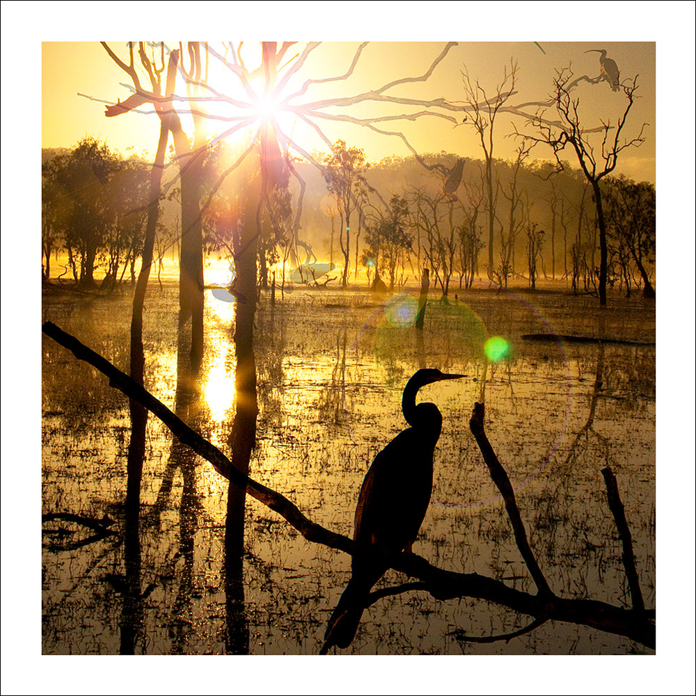 Sunrise in the wetlands with bird silhouetted against the sun