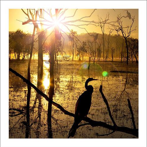 fp70. Sunrise Shadows