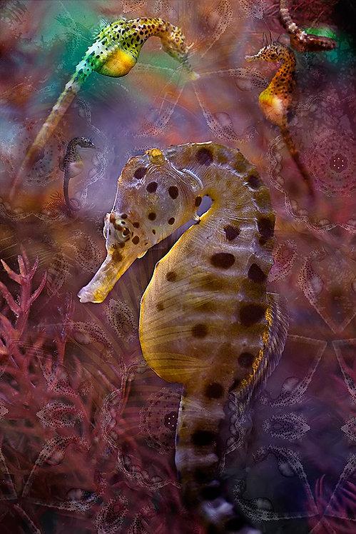 Seahorse dream