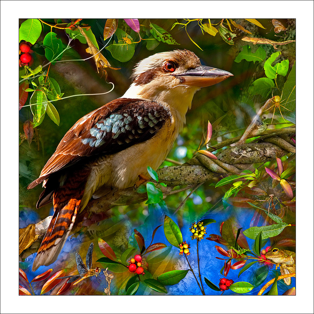 A colourful laughing kookaburra perched on a branch with frogs and insects surrounding it