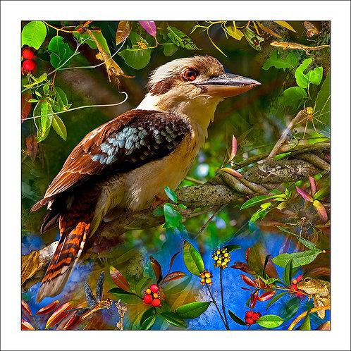 fp217. Kookaburra Delight