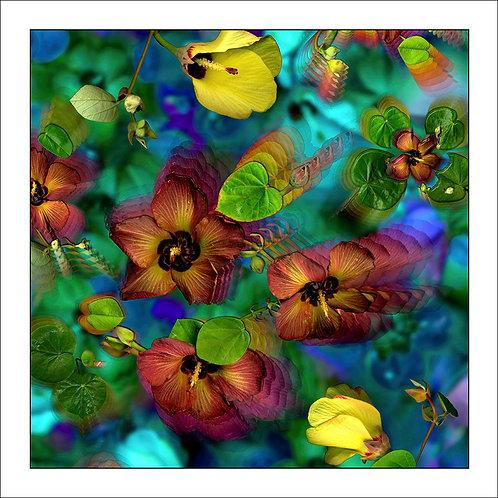 fp38. Native Hibiscus