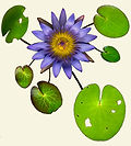 lotus_esteam2_beige_cl.jpg