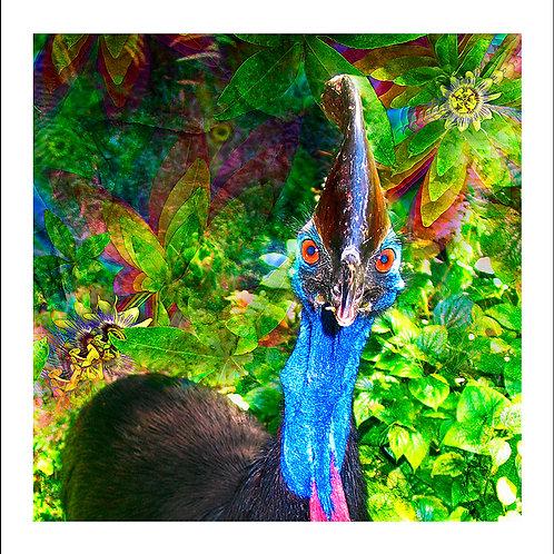 fp69. Cassowary (Missy)