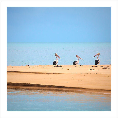 fp291. Pelican Beach