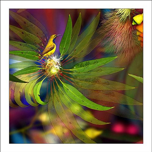 fp103. Sunbird