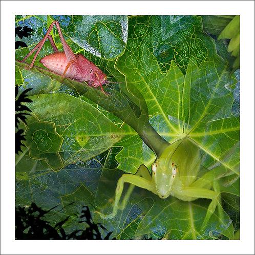 fp204. Leaf Eaters