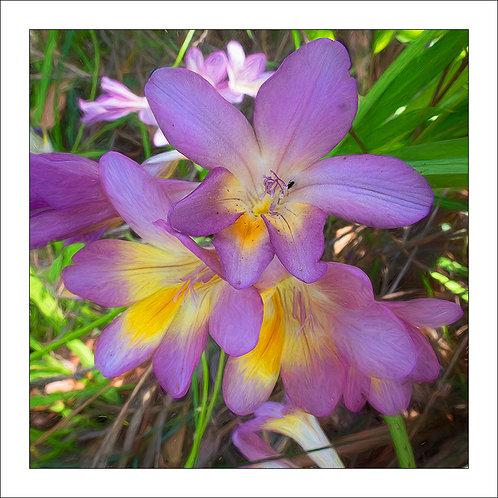 fp309. Wildflowers
