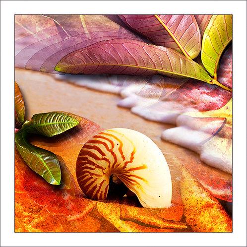 fp77. Nautilus Leaves