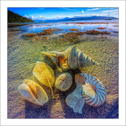 fp289. Island Shells