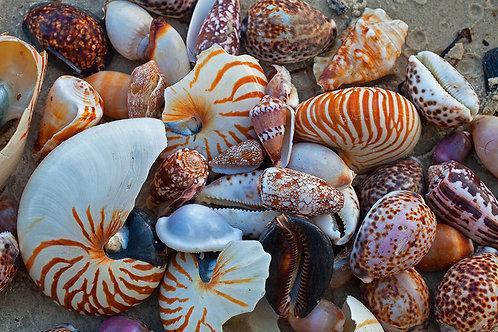 Seashell Beach