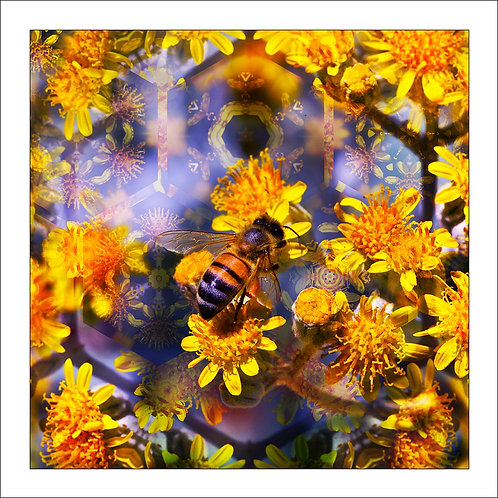 fp180. Bee