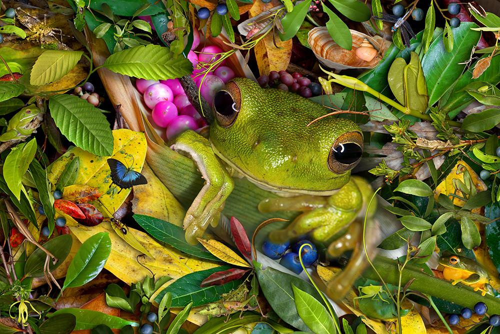 Whitelip green treefrog