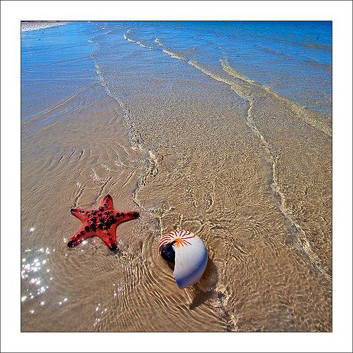 fp264. Shell Beach