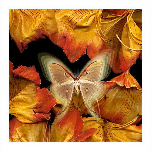 fp22. African Tulip