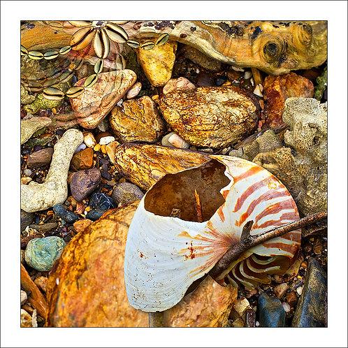 fp96. Nautilus Tide