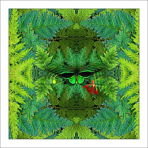 fp154. Butterfly ferns