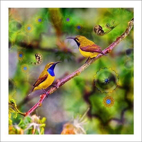 fp68. Sundala Birds