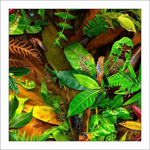 fp256. Leaflings
