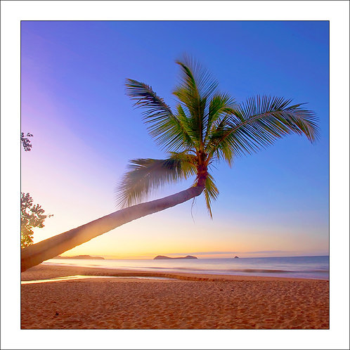 fp238. Coconut Tree