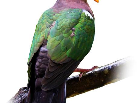 Birds of Australia fabric designs