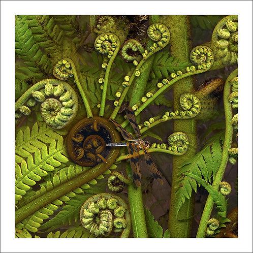 fp227. Dragonfly (treefern)