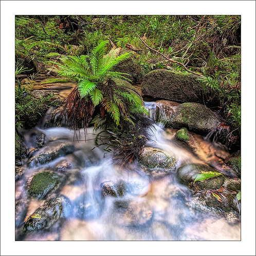 fp292. Silent Stream (fern)