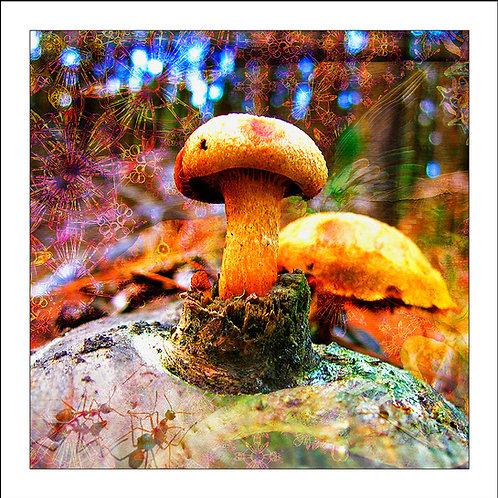 fp138. Winter Gold