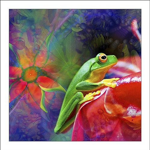 fp125. Green Frog Harmonics
